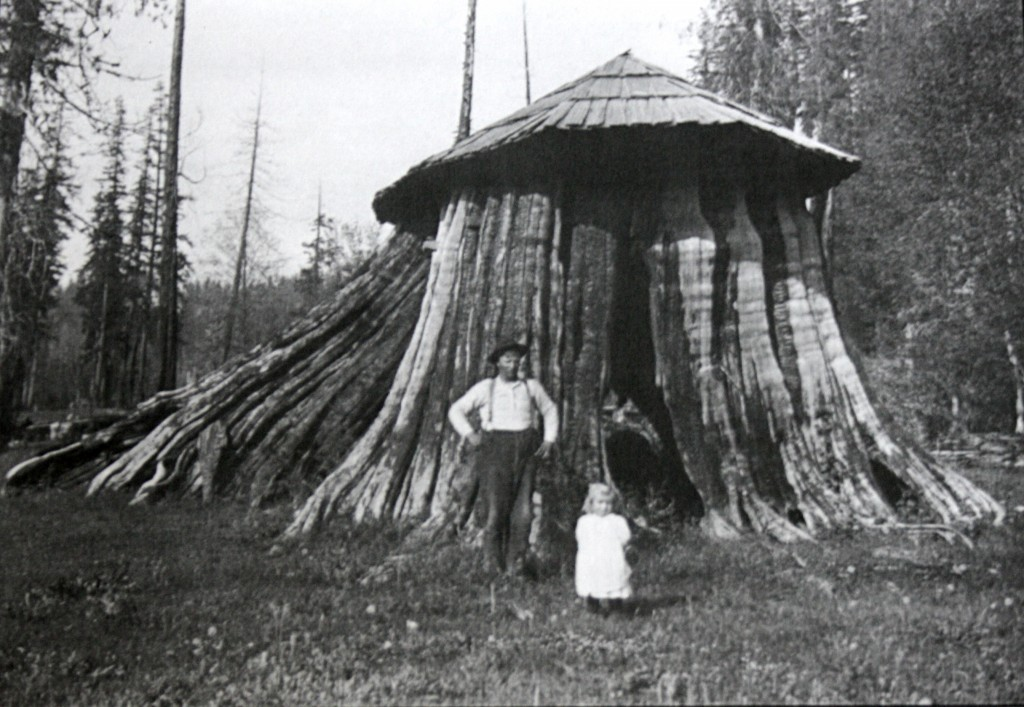 Cut-down-tree-with-roof