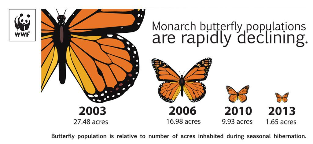 Monarch buttefly populations are rapidly declining